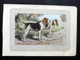 Mahler 1907 Antique Dog Print. Le Batard Anglo-Normand